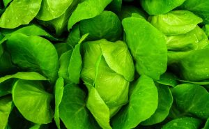 Baby Greens RI